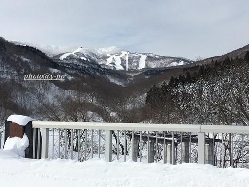 photo2131.JPG